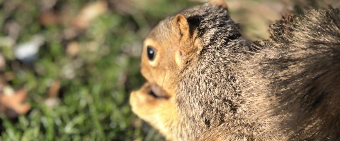 So Many Squirrels